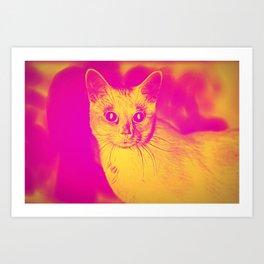How to Catch a Cat Art Print