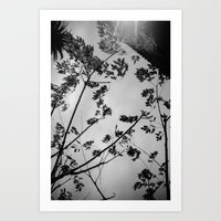 leaves, wall and shadows Art Print