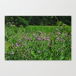 Legacy of the Highlands Canvas Print
