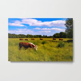 Cows! Metal Print