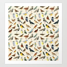 Great collection of birds illustrations  Art Print
