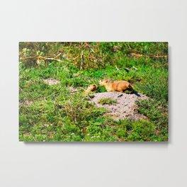 Prairie Dogs Metal Print