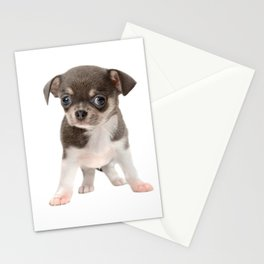 Chihuahua puppy standing Stationery Cards