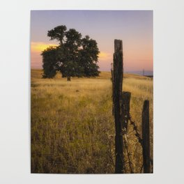Fenced In an oak tree along the fence at sunset Poster