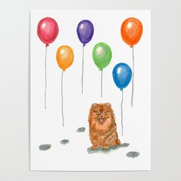 Pomeranian with balloons Poster
