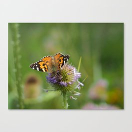 Painted Lady on a Teasel Canvas Print