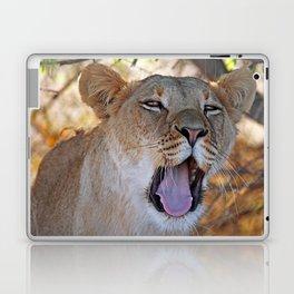 Tired lion - Africa wildlife Laptop & iPad Skin