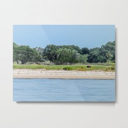A Wild Horse Grazing on the Island Metal Print