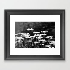 A field of dasies. Framed Art Print