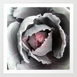 Cabbage Art Print