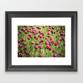 Tulips will remember  Framed Art Print