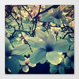 Magnolias flowering Canvas Print