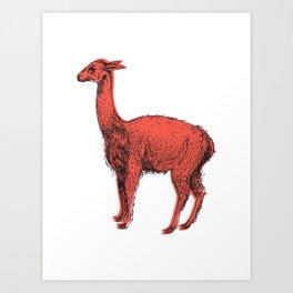 vicuña Art Print