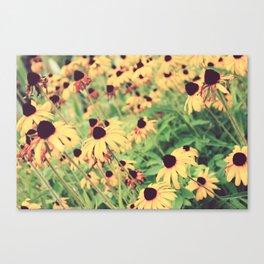 Rudbeckia - Cone Flower - JUSTART © Canvas Print
