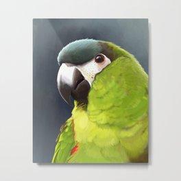 Hanhs Macaw Metal Print