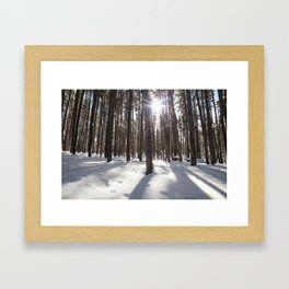 Yellowstone National Park - Lodgepole Forest 2 Framed Art Print