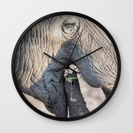 Elephant feeding Wall Clock