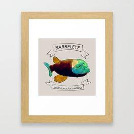 Barreleye Framed Art Print