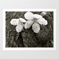 Places in Black & White: Plum Tree 21 Art Print