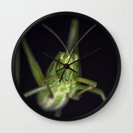Curious Katydid Wall Clock