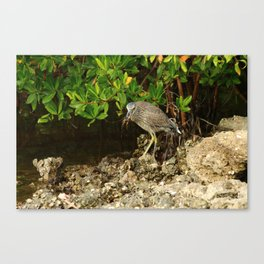 Love Crabs For Lunch Canvas Print