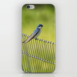 Tree Swallow Sitting on a Fence iPhone Skin