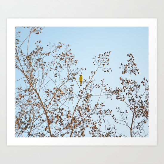 little yellow bird Art Print
