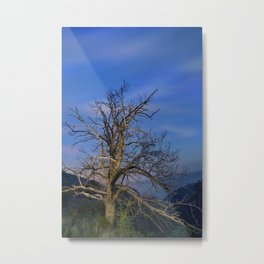 Centenary Chestnut at blue hour Metal Print
