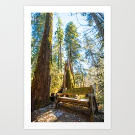 A peaceful place to think Art Print