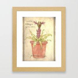 Planimarium - crevidea billbergia pyramidalis Framed Art Print