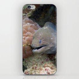 Moray Eel iPhone Skin