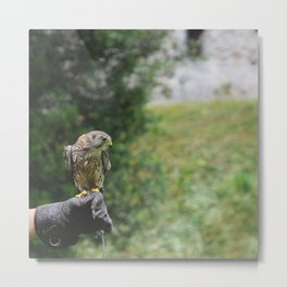 What about flying Metal Print
