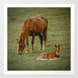 Horse And Foal Art Print