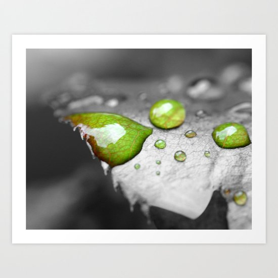 Rose Leaf with Dew Art Print
