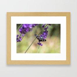 Amata Phagea on lavender Framed Art Print