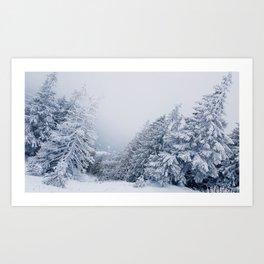 snow covered trees Art Print