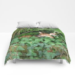 Ivy Fawn Comforters