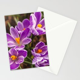 Beautiful lilac crocuses on a spring sunny day Stationery Cards