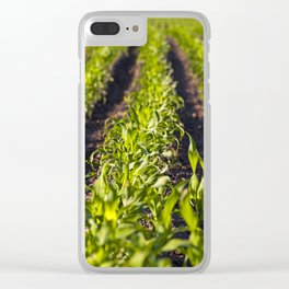green corn Clear iPhone Case