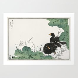 Coot and Lotus illustration from Pictorial Monograph of Birds (1885) by Numata Kashu (1838-1901) Art Print