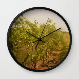 Grapevines in the Sunshine Fruit Color Photography Wall Clock