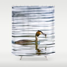 Great crested grebe and its catch Shower Curtain