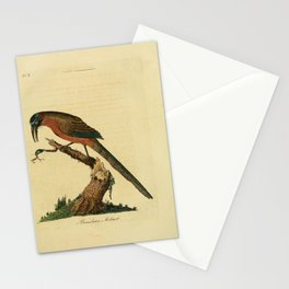 John Latham - A General Synopsis of the Birds (1781) - Brazilian Motmot Stationery Cards