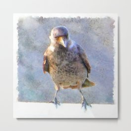 Jackdaw Watercolor Metal Print