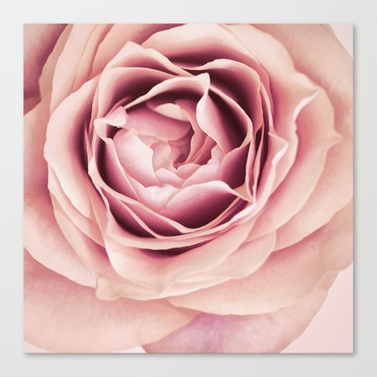 My Heart is Safe with You, My Friend - pale pink rose macro Canvas Print