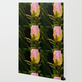 camellia III Wallpaper