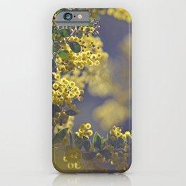Queensland Silver Wattle iPhone Case