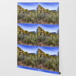 Fresh Green Plants Growing Near Underground Water by the Mountains in the Anza Borrego Desert Wallpaper