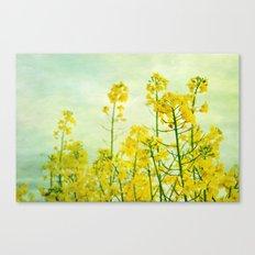 rape blossoms Canvas Print