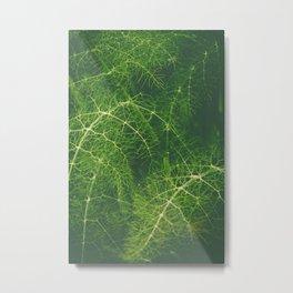 Beautiful fennel leaves Metal Print